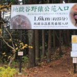 地獄谷温泉で夏に猿と自然を満喫!