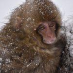 地獄谷野猿公苑で絶景をツアーで満喫!絶景を楽しもう!