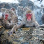 地獄谷温泉の野猿をライブカメラで自宅で観る方法